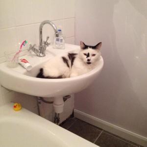 Sinkcat